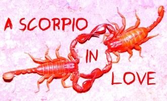 знак зодиака скорпион в красном цвете