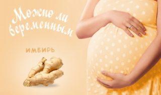 корень имбиря и беременная женщина