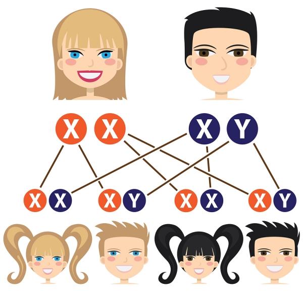 мужские и женские хромосомы