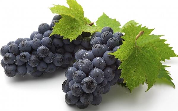грозди винограда изабелла