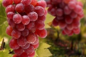Калориен ли черный виноград – полезные свойства, витамины, калорийность, количество сахара. Чем полезен виноград кишмиш для беременных, повышает ли он сахар в крови?