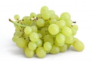 ветка зеленого винограда