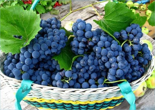 корзина с синим виноградом