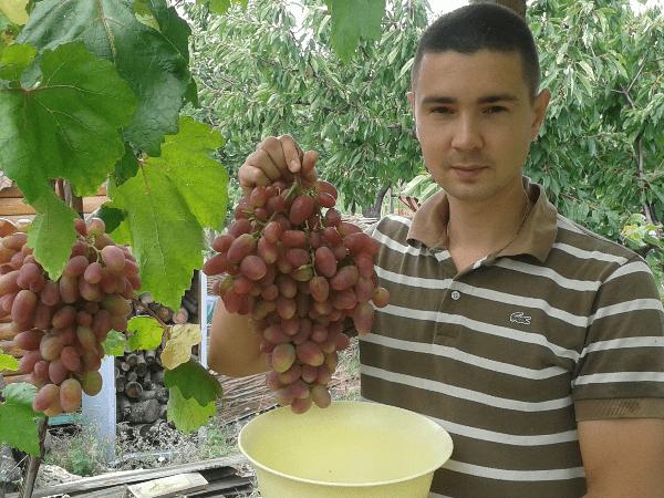 мужчина держит гроздь винограда