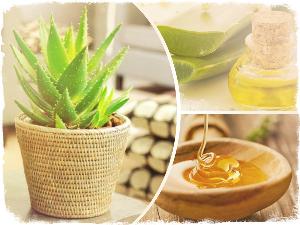 алоэ вера в горшке, мед и масло эфирное