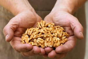 очищенные грецкие орехи в ладонях