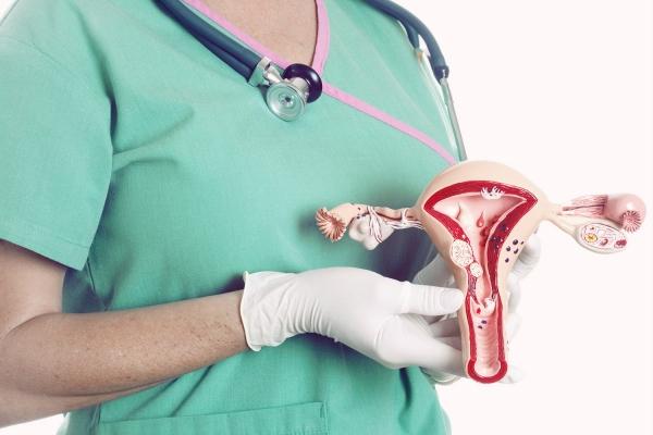 Боровая матка в гинекологии и не только