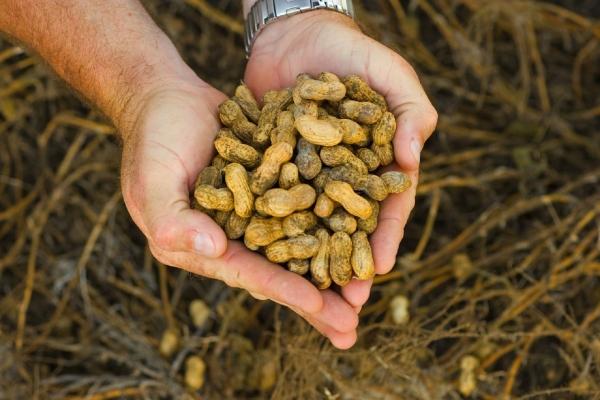 арахис в ладонях