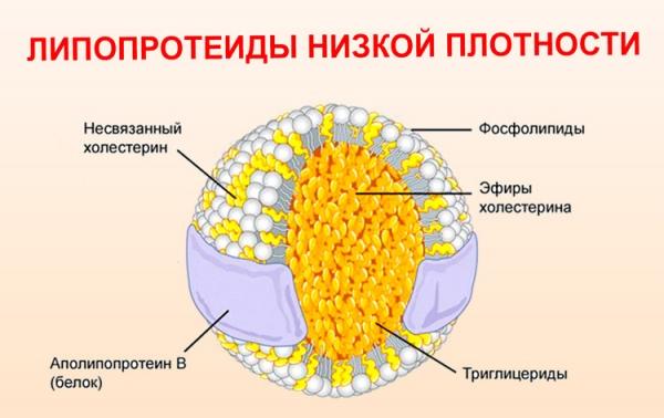 схема с липопротеидами