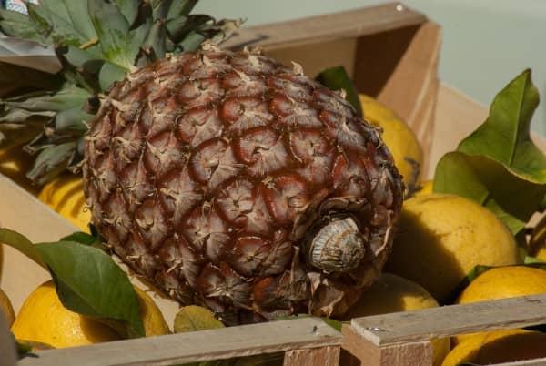 ананас на лимонах