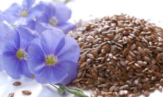 лен, цветки и семена