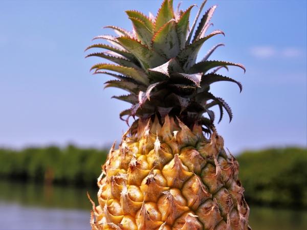 ананас на фоне природы