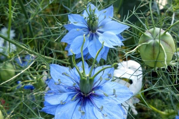 цветы черного мира