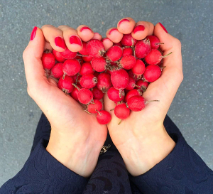 ягоды шиповника в форме сердца