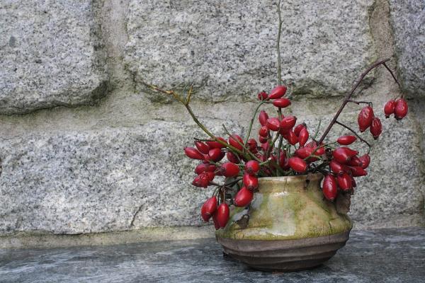 ветки шиповника с ягодами в железной вазе