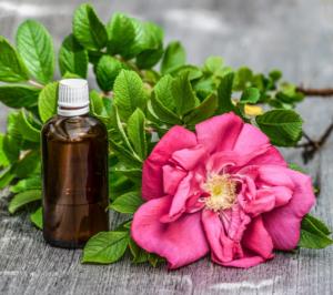 цветок шиповника, бутылочка с маслом