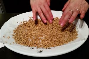 перебирают семена пажитника в тарелке