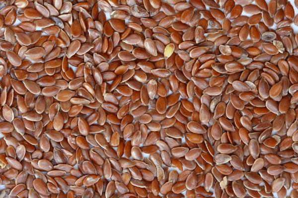 лен, семена