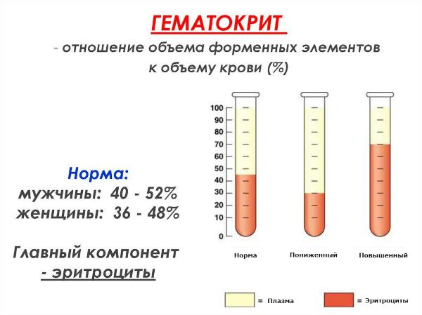 гематокрит, схема