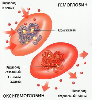 клетки крови с гемоглобином