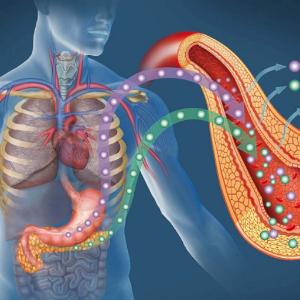 схема органов в организме