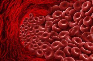 много гемоглобина в крови