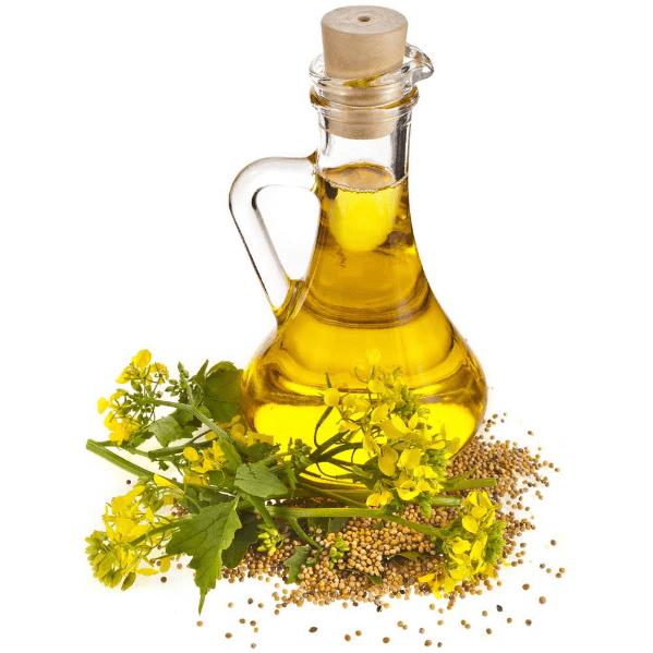 семена горчицы, цветы и масло