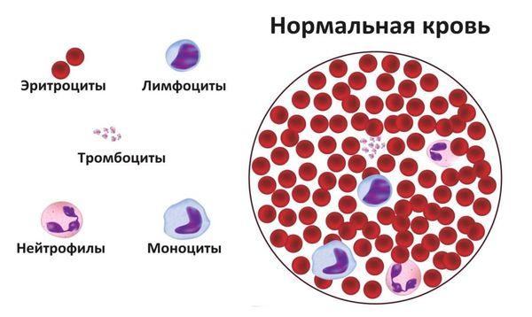 нормальная кровь