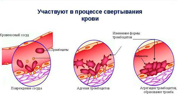 тромбоциты, схема