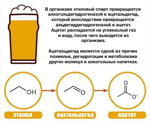 метаболизм алкоголя
