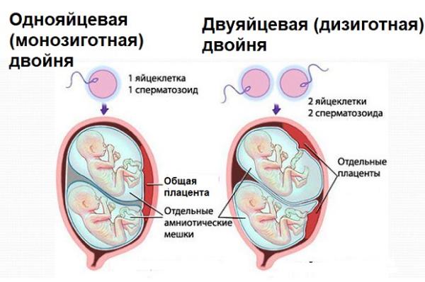 схема двойни