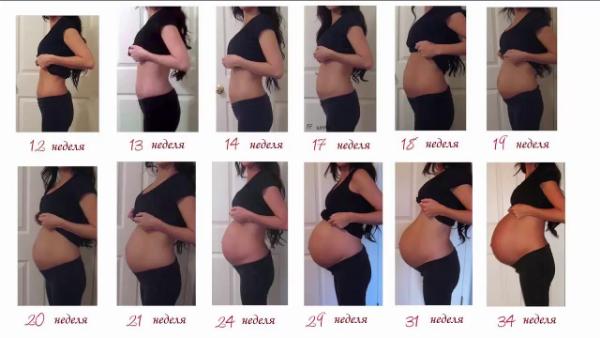 Правила роста живота во время беремености. Живот во время беременности по неделям и месяцам