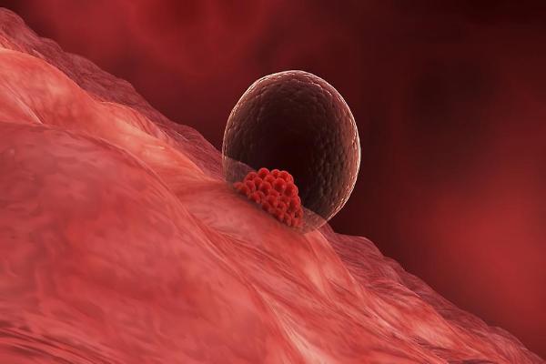 Имплантация яйцеклетки в матку