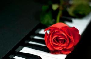 роза лежит на пианино