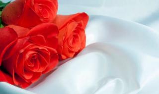 розы на белой ткани