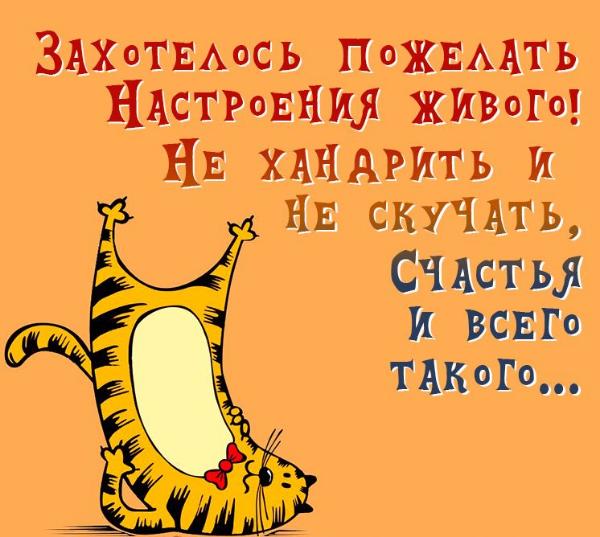 картинка с котом и текстом