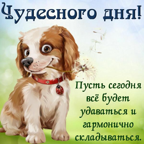 картинка со щенком