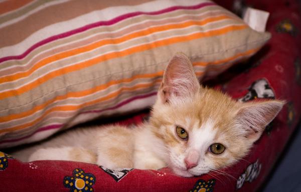 котик в подушках