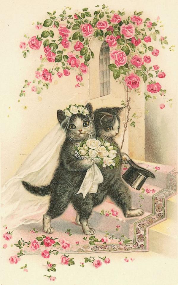 котята в роли жениха и невесты
