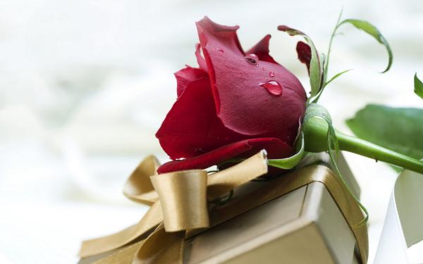 роза и коробка с подарком