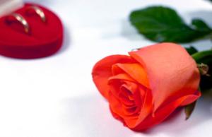 роза и кольца в коробочке