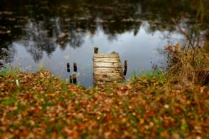 озеро, листья и мостик