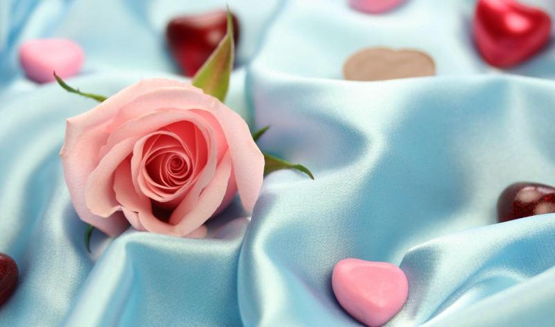 роза, атлас